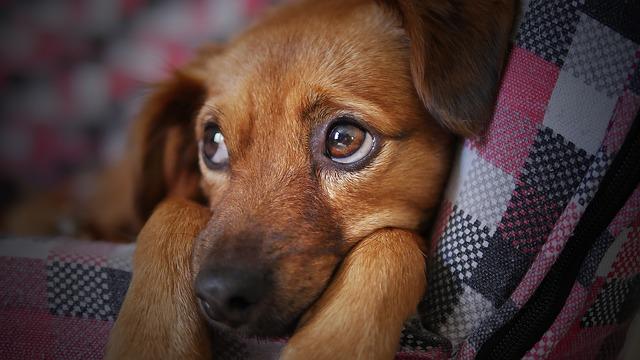 4 príznaky, že Váš pes je znepokojený