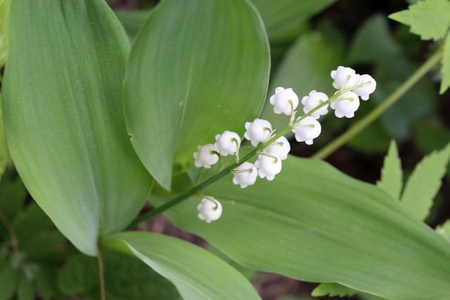 Jedovatá krása: na tieto kvety si dajte pozor!