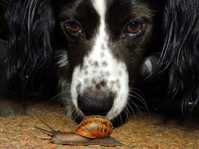 Slimák prežije psa
